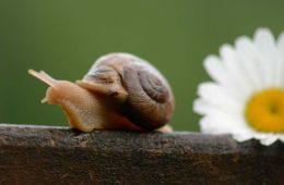 Movimiento-Slow-Life-un-cambio-de-vida